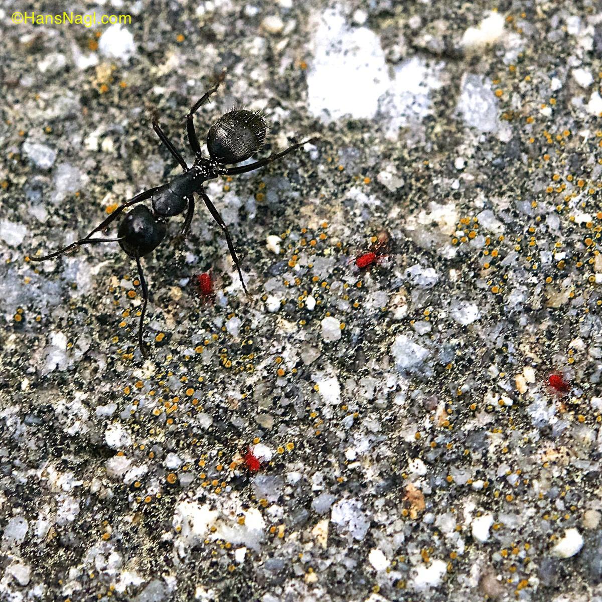 Red spider mites on concrete
